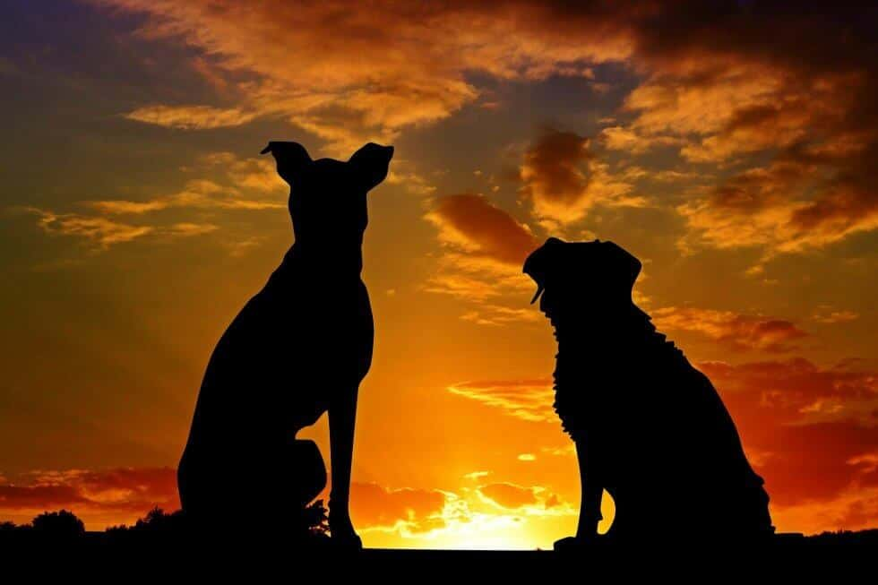 dogs2222801_1920-980x653